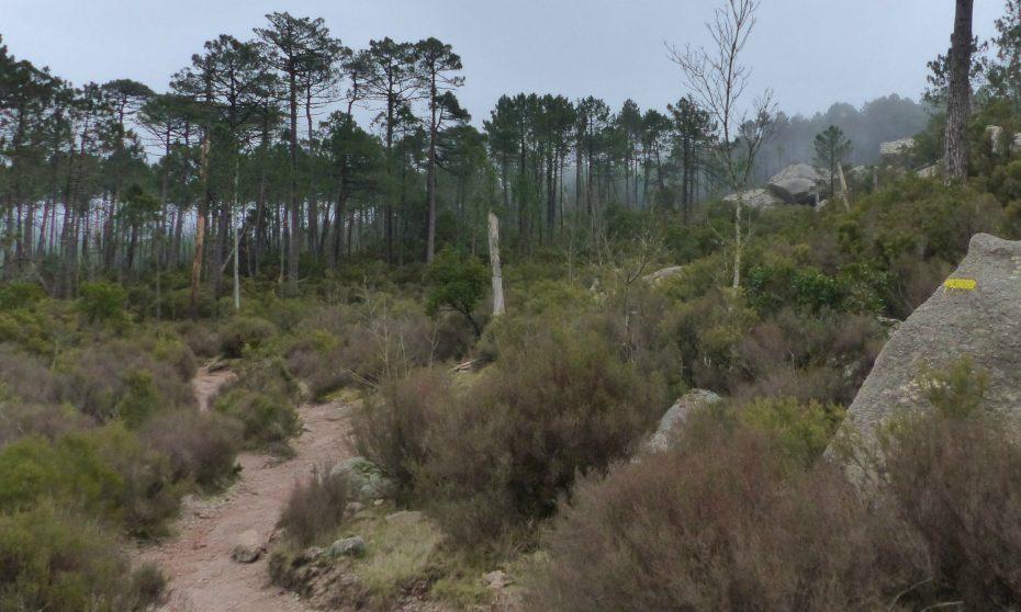 randonnée de Piscia di Gallo à Zonza | Corse VTC