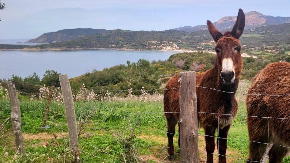 La randonnée du chemin de Puntiglione à Cargèse | Corse VTC
