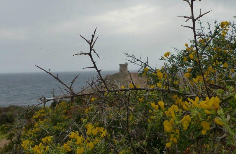 la randonnée de la tour d'Omigna à Cargèse par Peru | Corse VTC
