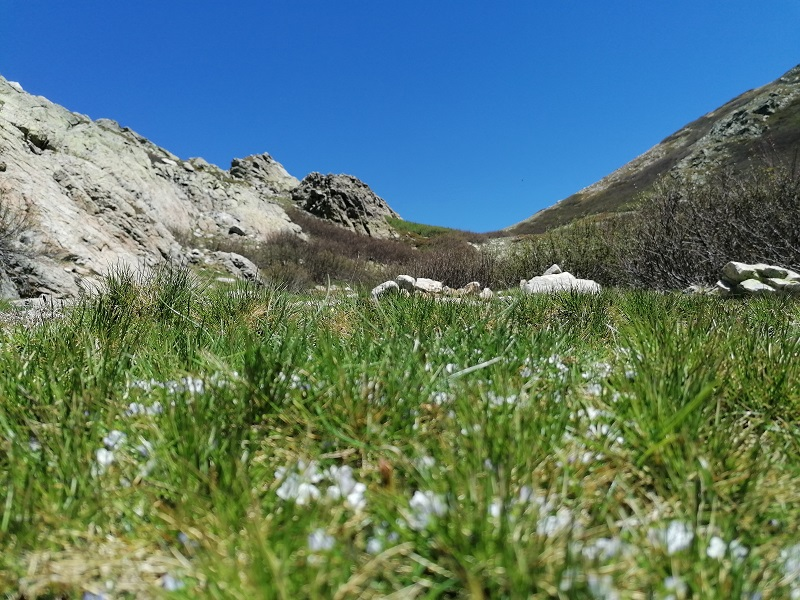 Randonnée du lac de Bracca au col de Scalella   Corse VTC