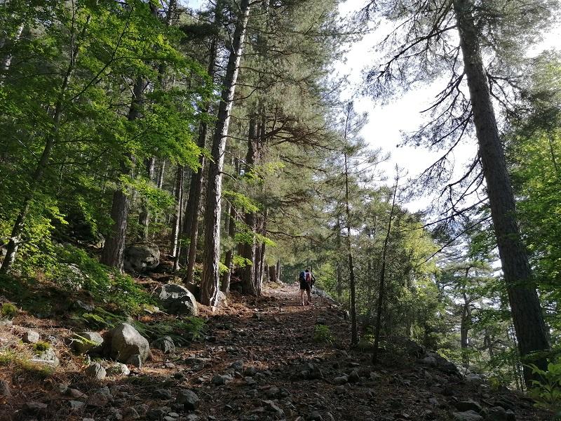 randonnée du Monte d'Oro à Vizzavona | Corse VTC